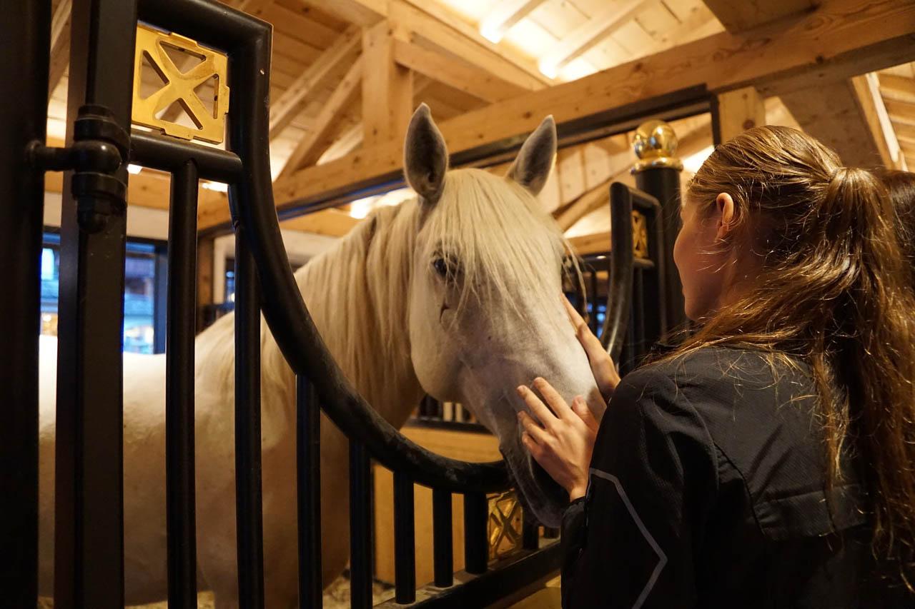 cheval haras lipica