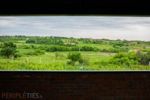 Routes des vins turcs - vignoble
