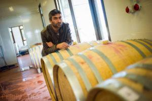 Route des vins turcs - vignoble