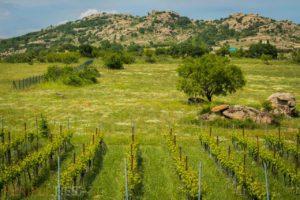 Routes des vins, Vignoble turc - Kirkaréli