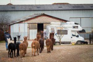 camping car ferme lamas